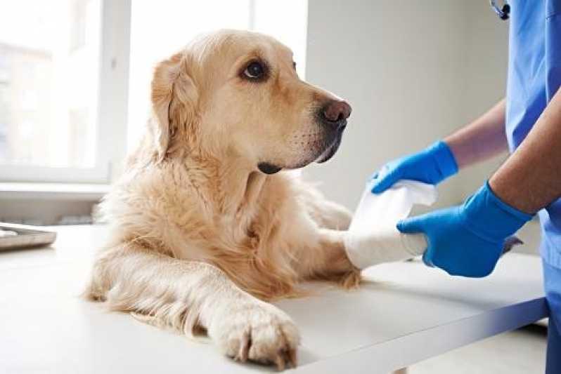 Emergência Canina Preço Jardim Bonfiglioli - Emergência Pequenos Animais