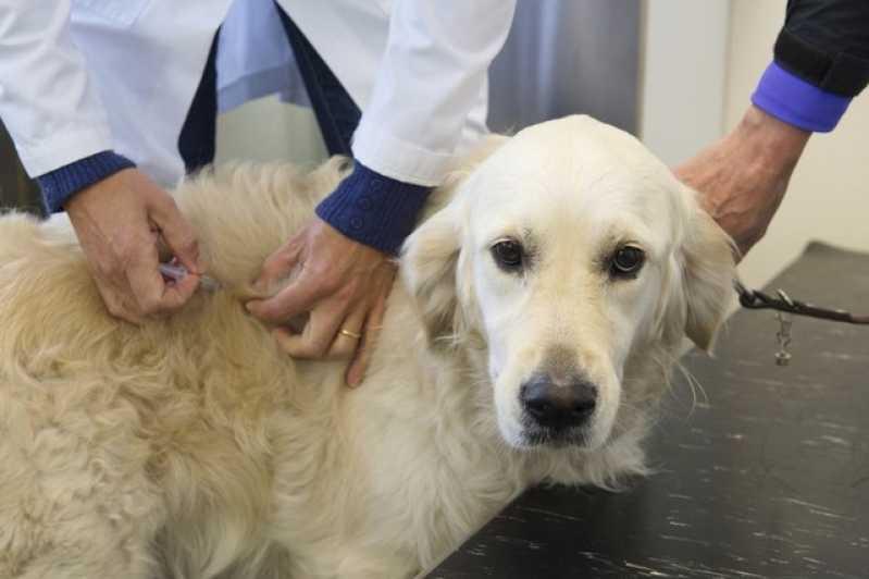 Onde Encontrar Hospital Veterinário Cães e Gatos Cidade Jardim - Hospital Veterinário