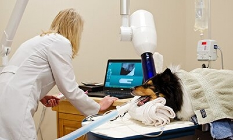 Quanto Custa Consulta de Veterinário Morumbi - Consulta Rápida Veterinária