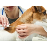 aplicação de microchip em cachorros