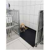 clínica veterinária para animais Portal do Morumbi