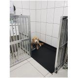 clínica veterinária para animais Campo Limpo