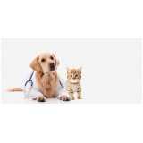 emergência em pequenos animais Jaguaré