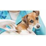emergência para cães atropelados preço Raposo Tavares