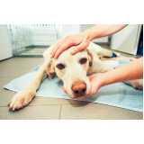 emergência canina