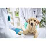 emergência para cães
