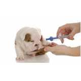 exame de sangue veterinário valor Embu