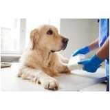 exame ortopédico veterinária Jardim Monte Kemel