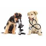 exames clínicos veterinários Jardim Pirajussara