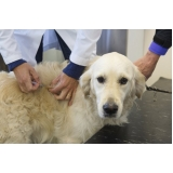 hospital veterinário cães e gatos