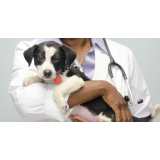 hospitais veterinários mais próximo Santo Amaro