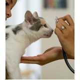 internação veterinária