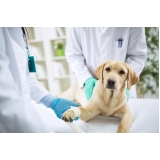 onde encontrar hospital veterinário Santo Amaro