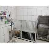 onde encontro clínica veterinária para cachorro Lapa
