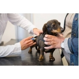 onde encontro vacina veterinária v10 Jardim Pirajussara