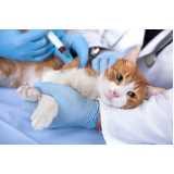 onde encontro vacinação para cães e gatos Rio Pequeno