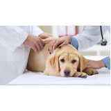 quanto custa emergência para cães Santo Amaro
