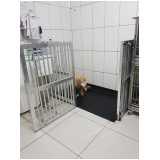 quanto custa internação de cães idosos Alto de Pinheiros