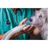 quanto custa internação para cães Taboão da Serra