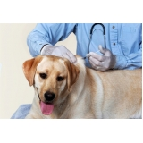 vacina veterinária contra gripe canina Alto de Pinheiros