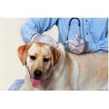 vacina veterinária contra gripe canina Santo Amaro