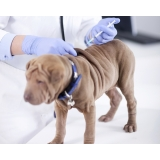 vacinação para animais de estimação Alto de Pinheiros