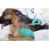 vacinação para animais de estimação