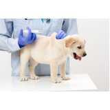 vacinação para cachorro filhote