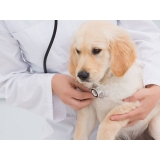 veterinário para cachorro Rio Pequeno