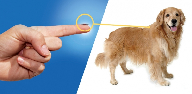Aplicação de Microchip em Cachorros Jardim Maria Rosa - Aplicação de Microchip