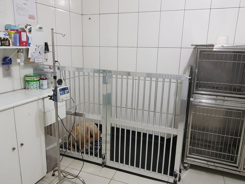 Castração de Cães Pinheiros - Castração de Cachorra