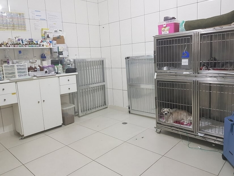Clínica 24 Horas Veterinário Jaguaré - Clínica Veterinária 24hs