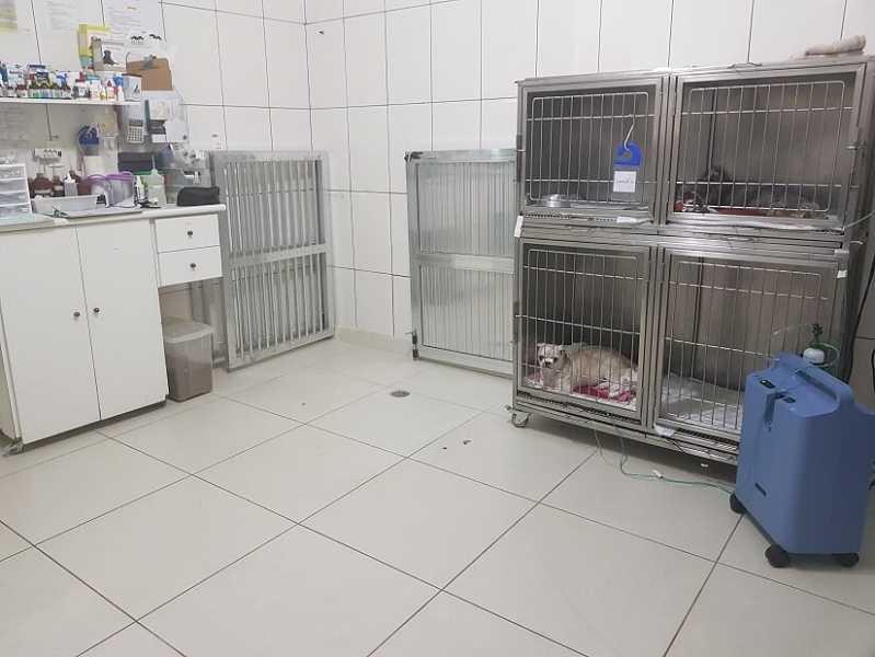 Clínica de Veterinária 24 Horas Rio Pequeno - Clínica Veterinária 24horas