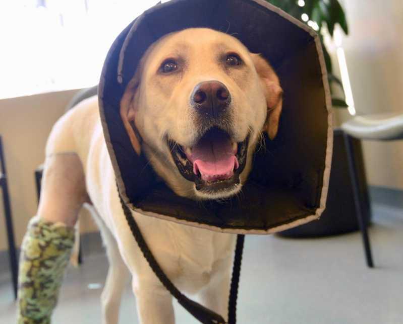 Emergência Canina Valor Portal do Morumbi - Emergência para Cães Atropelados