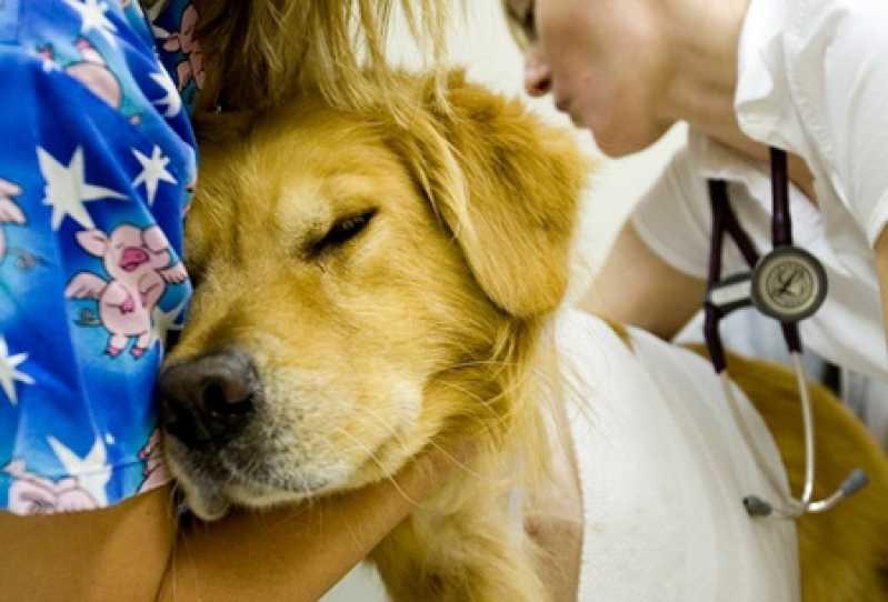 Emergência Canina Portal do Morumbi - Emergência para Cães Atropelados