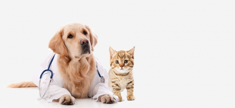 Emergência em Pequenos Animais Jardins - Emergência Animal Doméstico