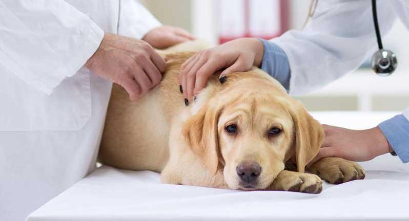 Hospitais Veterinários Cães e Gatos Jardim Pirajussara - Hospital Veterinário Mais Próximo