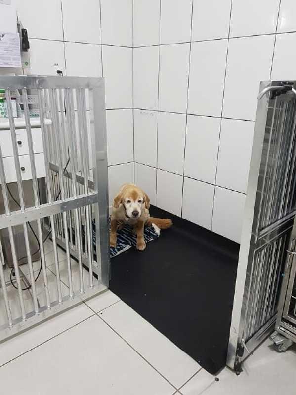 Hospital de Cachorro em Sp Portal do Morumbi - Hospital Veterinário Mais Próximo