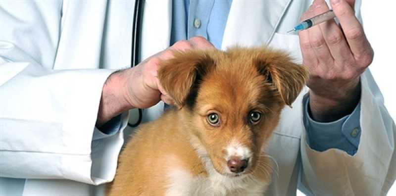 Hospital Veterinário Cães e Gatos Vila Olímpia - Hospital para Cães e Gatos