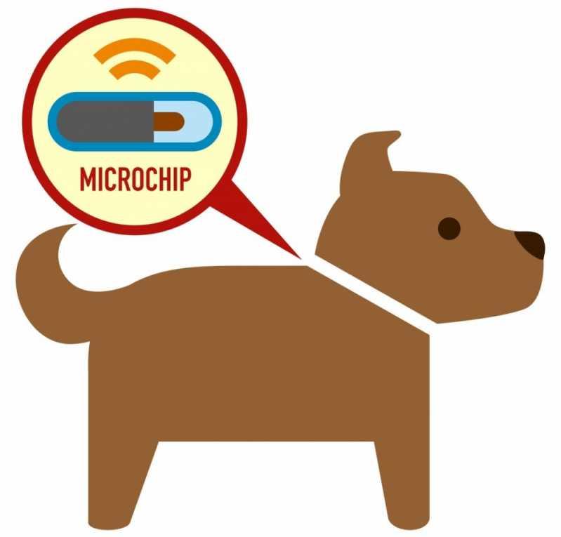 Onde Encontro Aplicação de Microchip em Cachorros Jardins - Aplicação de Microchip em Cães