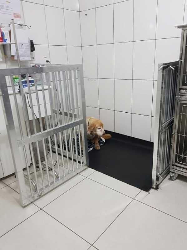 Onde Encontro Clínica Veterinária e Pet Shop Jaguaré - Clínica Veterinária