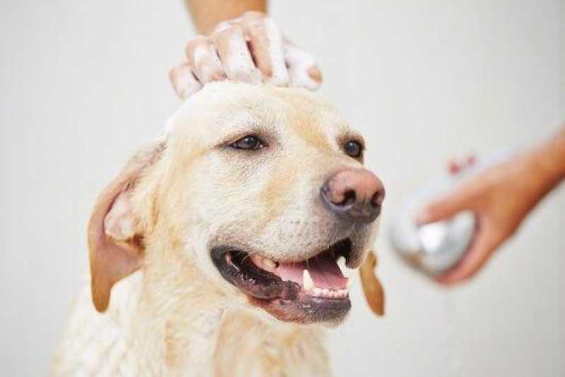 Onde Encontro Hospital para Cães e Gatos Cotia - Hospital para Cães e Gatos
