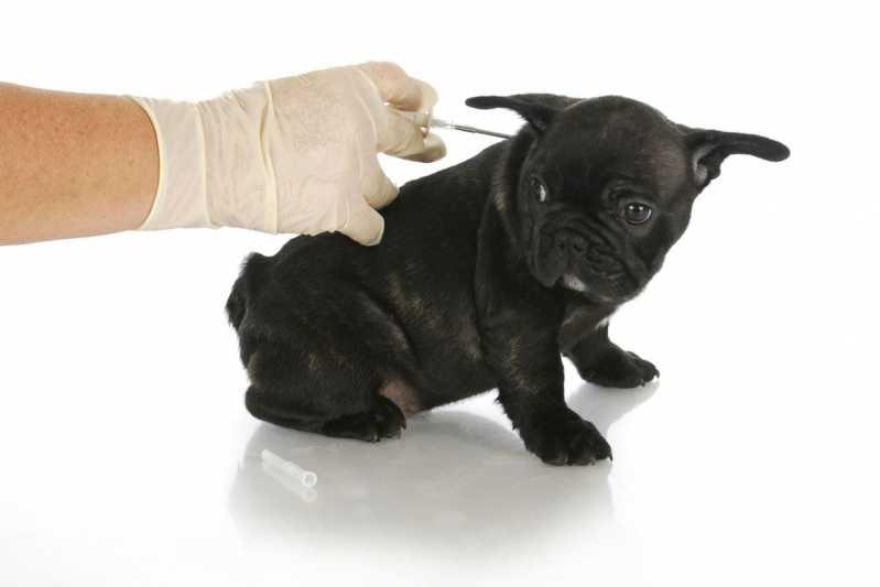 Quanto Custa Aplicação de Microchips em Filhotes Campo Limpo - Aplicação de Microchip em Cães