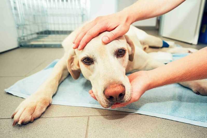 Serviço de Internação para Cães Jardim Pirajussara - Internação para Cães