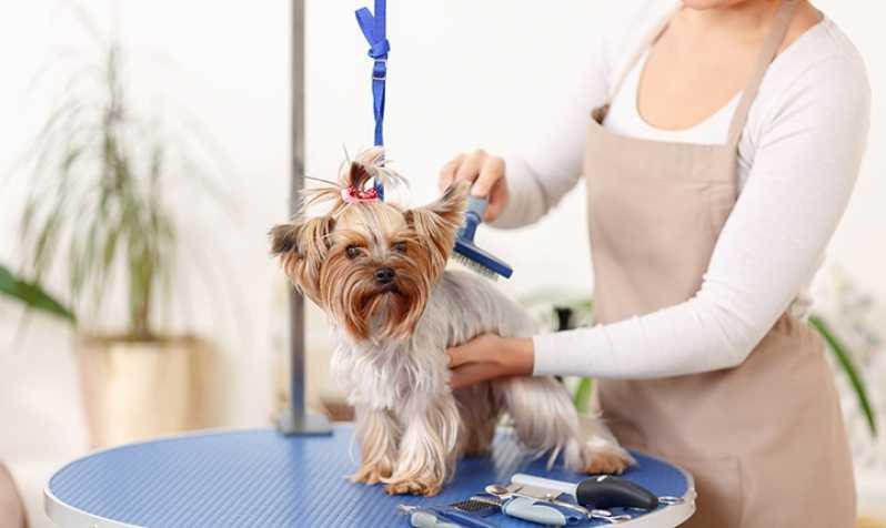 Serviço de Internação Veterinária 24 Horas Osasco - Internação de Cães Idosos