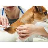 aplicação de microchip para animais