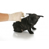 aplicação de microchips em filhotes