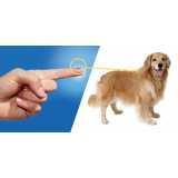 aplicação de microchip em cachorros Morumbi