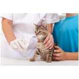 castração de gato macho adulto preços Santo Amaro