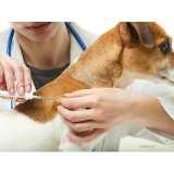 castração em cachorra valores Jaguaré